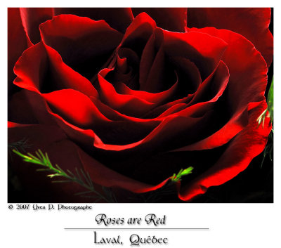 Roses are Red ...