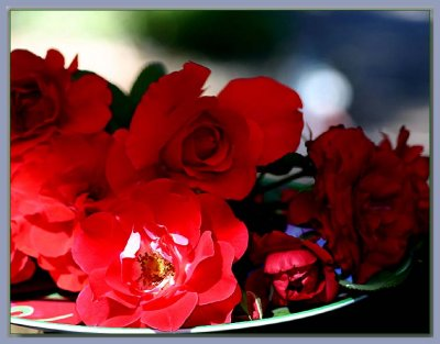 Dish of red roses