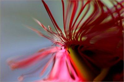 Gum blossom art