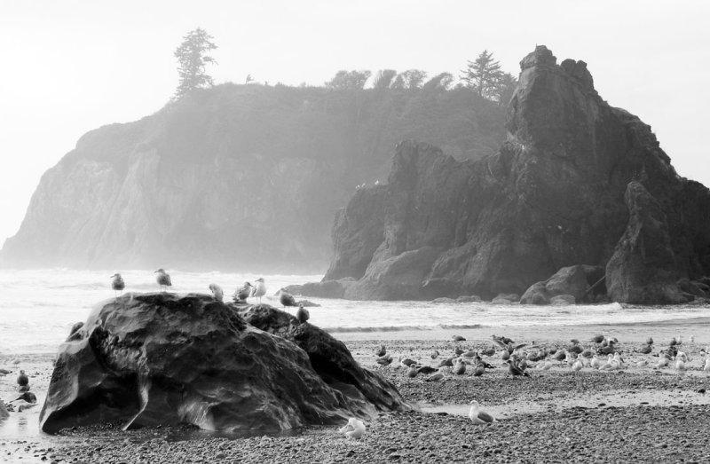 Birds Huddling Together at Ruby Beach, Washington
