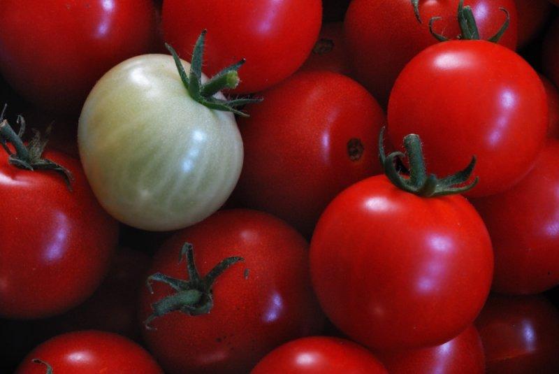green tomato