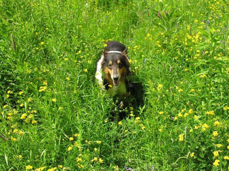 Sabrina in the field