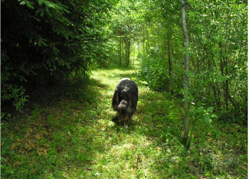 Sabrina on woodland trail