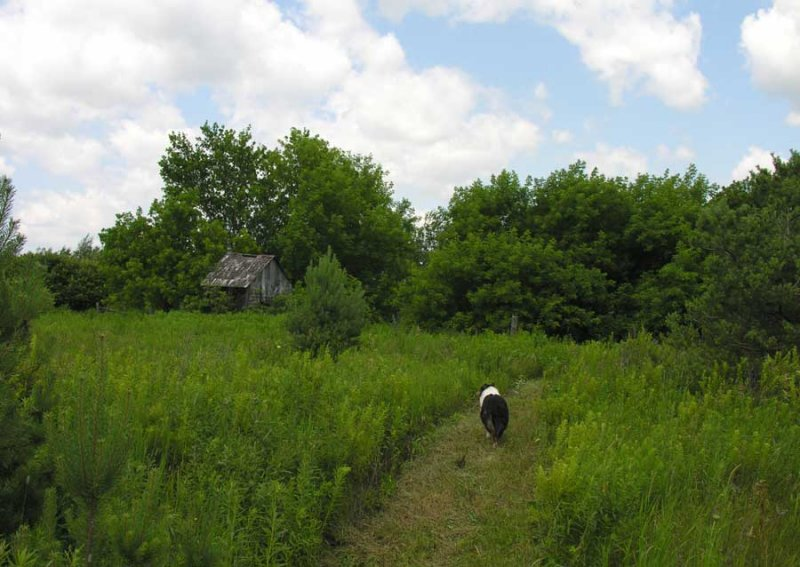 Sabrina near old barn ruins