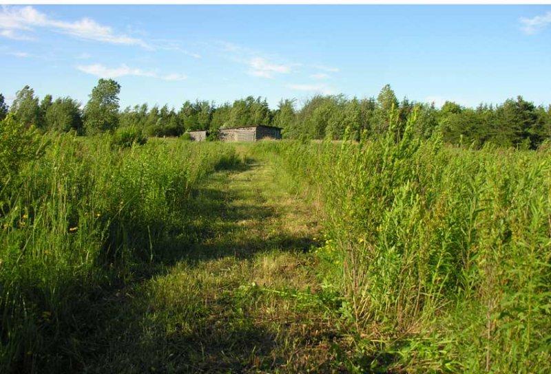 path to barn