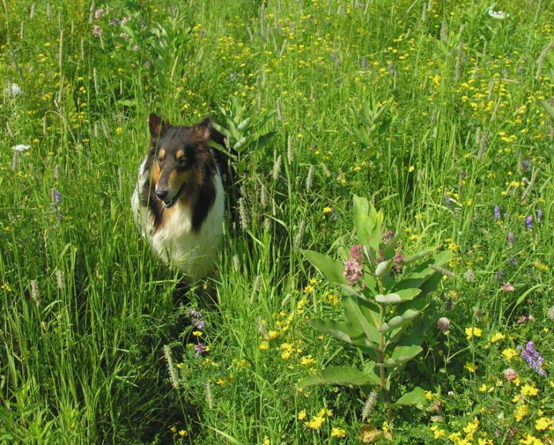 sabrina in meadow