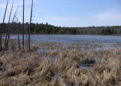 Purdon Bog - small lake adjacent to bog