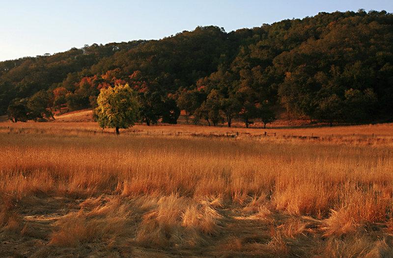 Early Fall Field.jpg