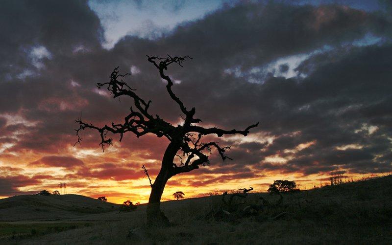 Falling Oak.jpg