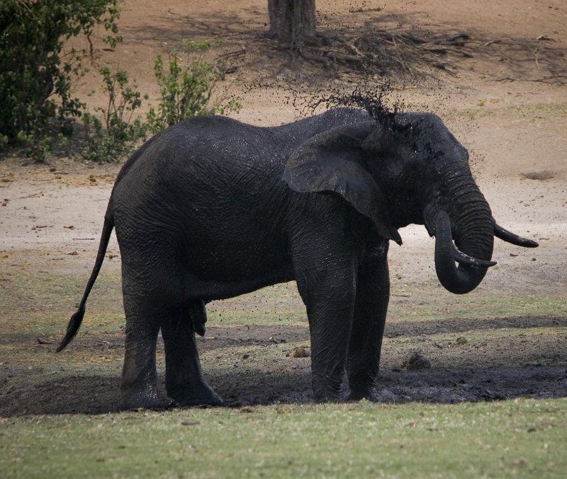 Botswana, Chobe NP 5