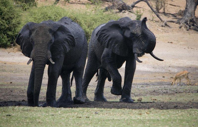 Botswana, Chobe NP 6