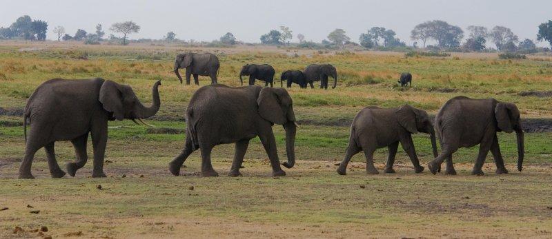 Botswana, Chobe NP 1