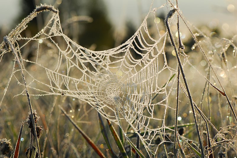 What a spider web looks like at 25F
