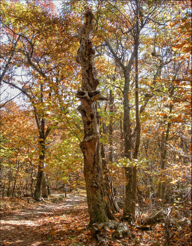 Hard luck tree IMGP0915