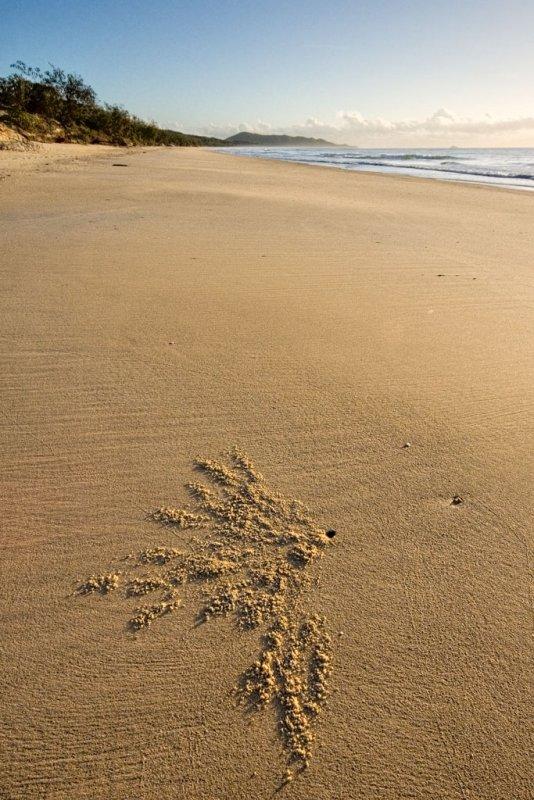 Clean beach, sunrise, one crab burrow. Hinchinbrook Island _DSC2554