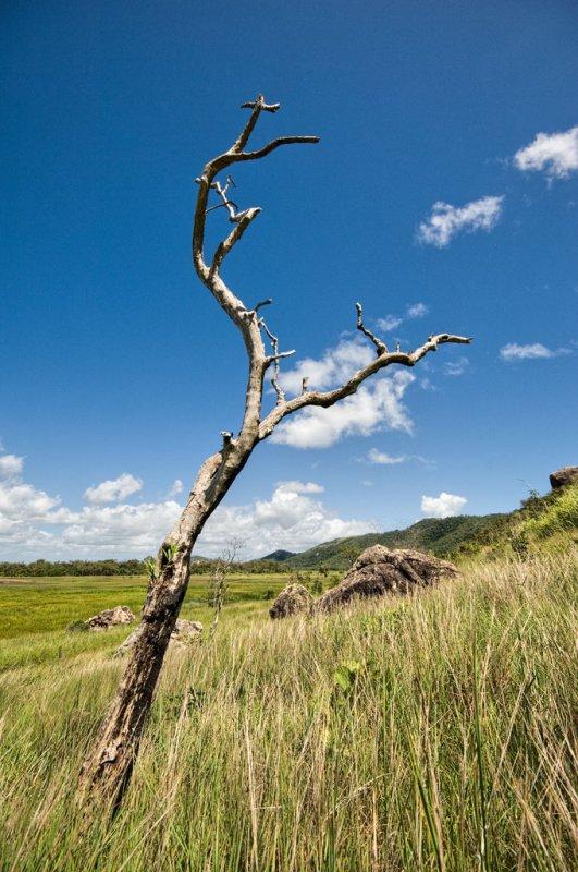 Dead tree, clouds, rocks DSC_7908