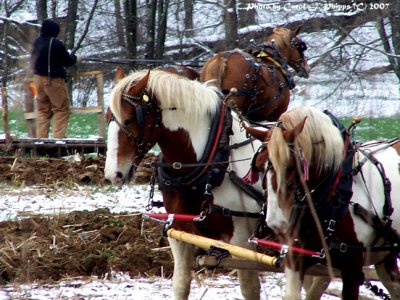 West Virginia Horse Teams.