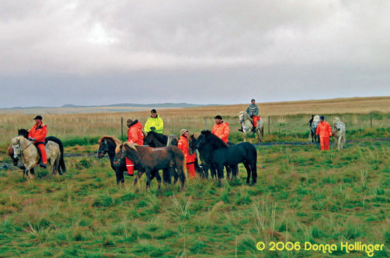 Icelandic Horses and drovers