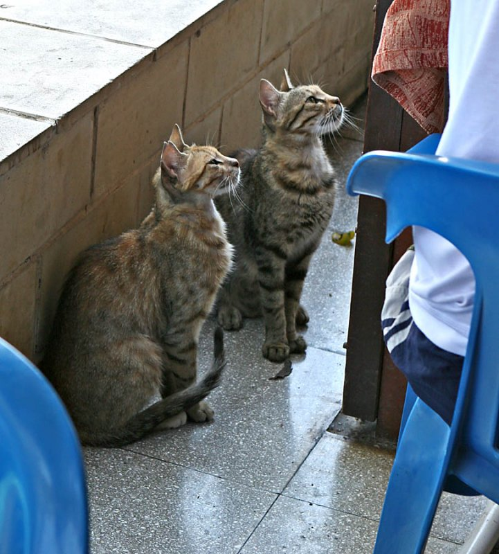 Twins begging at the table
