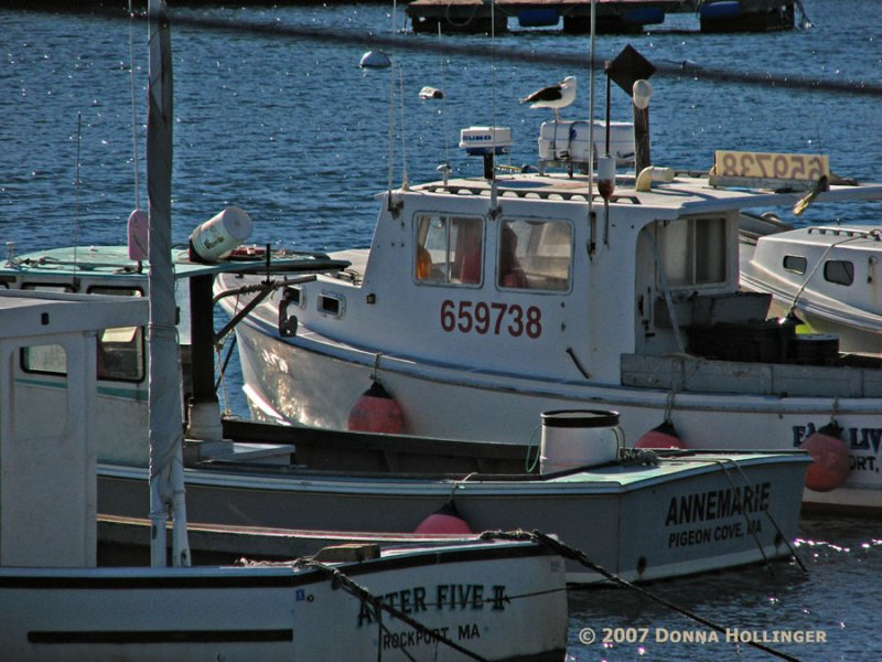Pigeon Cove Boat with Seagull
