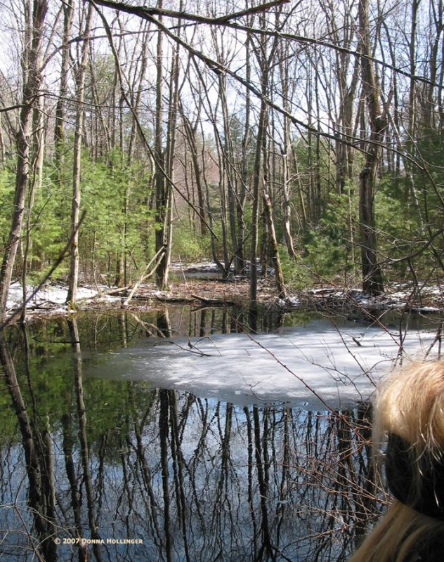 Vernal Pool with Ice