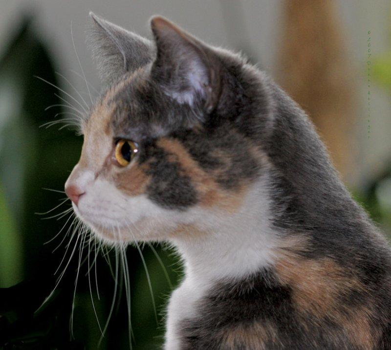Josie Keeping Watch