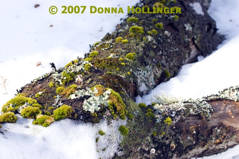 Lichen and Mushrooms
