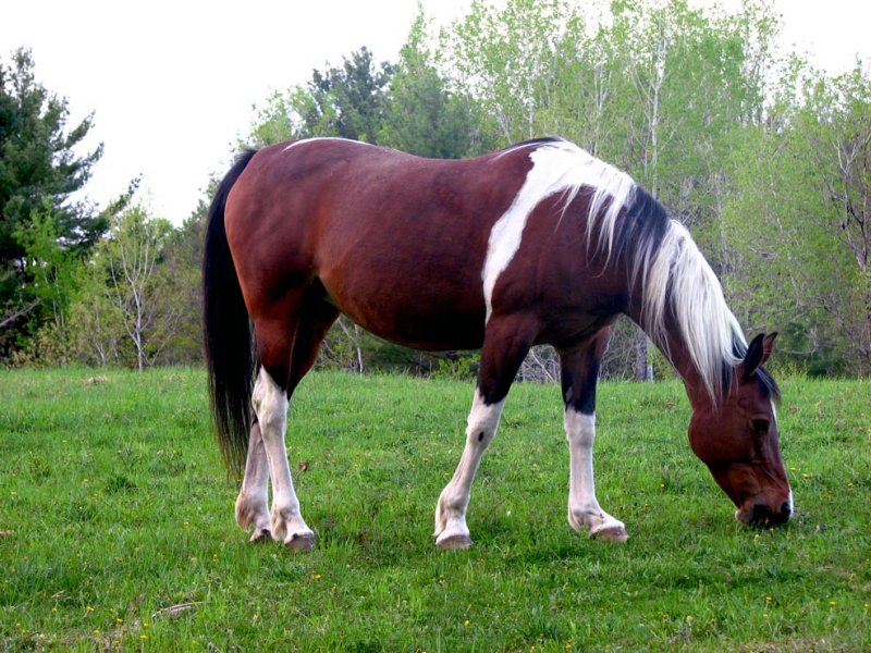 A Favorite Horse Revisited