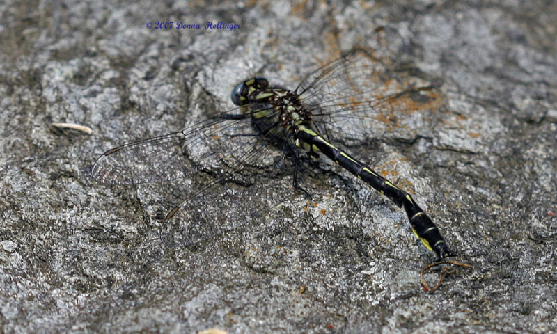 Dragonfly resting on stone step