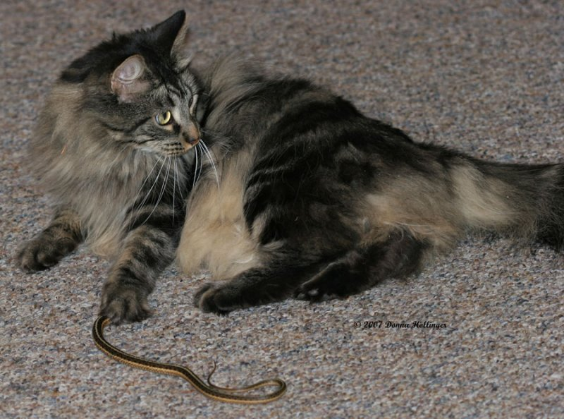 Mica caught a snake!