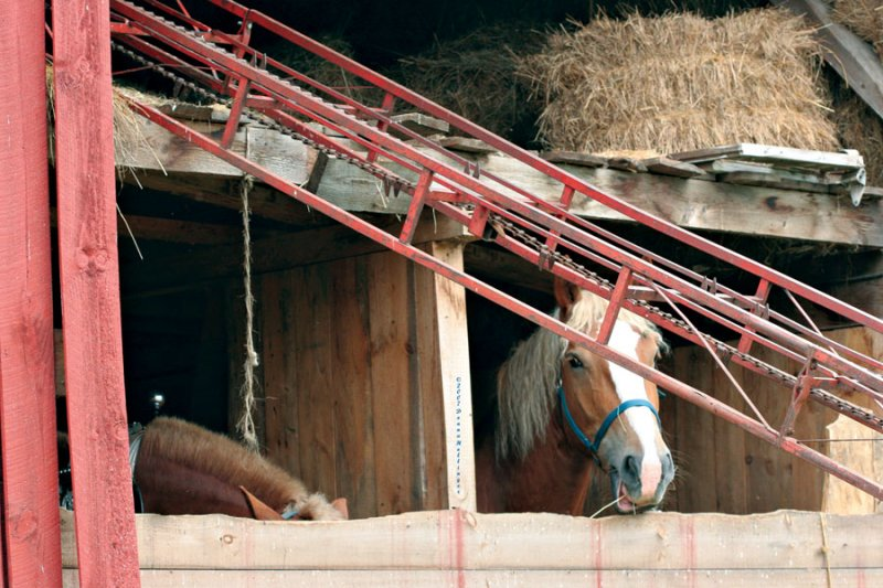 Shooting Earls Horse.