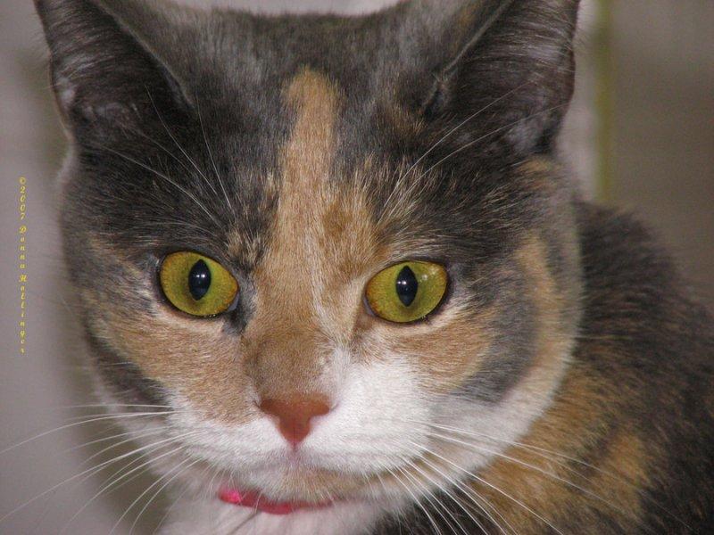 Missy Kitty