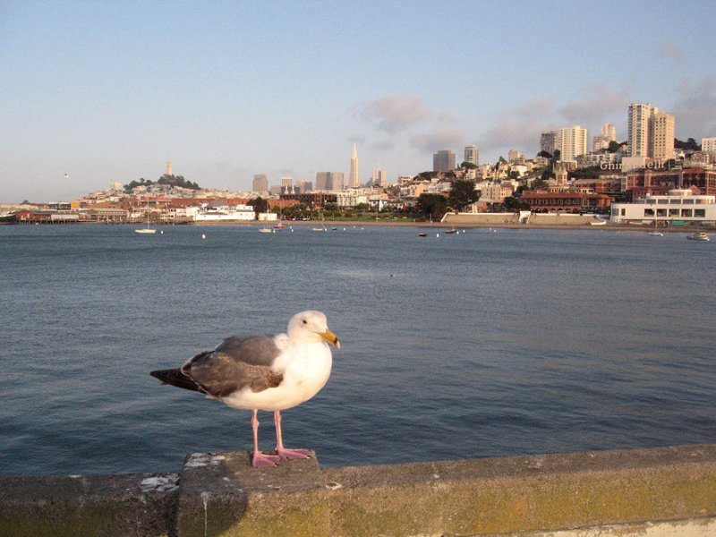 Gulls view of San Francisco