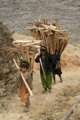 women collect and carry firewood