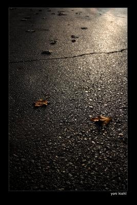 leaves on herzl.jpg