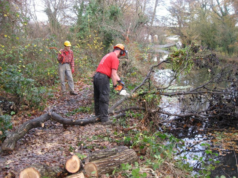 We had one chainsaw operator on site (River Wey in background)