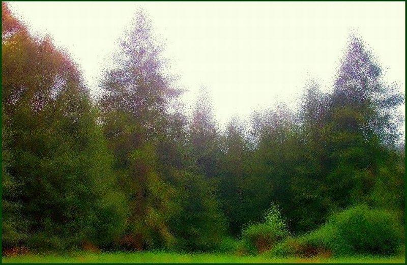 Rain Meadow