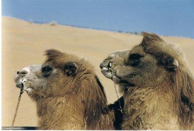 0112CN0119332E - Twins??? Tengger Desert, CHINA