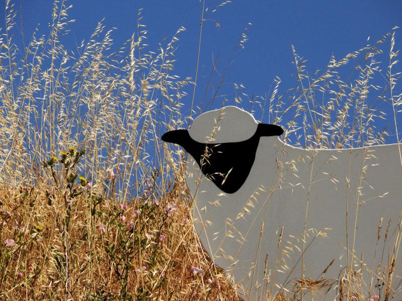 Grazing, di Rosa Preserve, Napa Valley, California, 2007