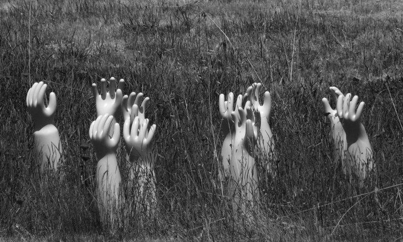 The haunting field,  di Rosa Preserve, Napa Valley, California, 2007