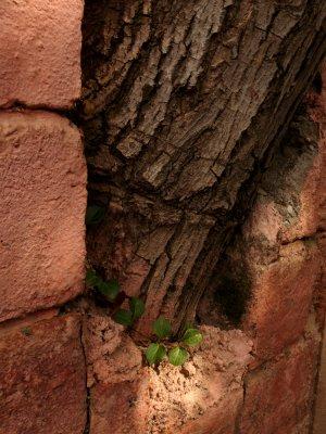 Through the wall, Ouirgane, Morocco, 2006