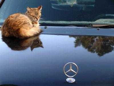 Fat cat, Rabat, Morocco, 2006