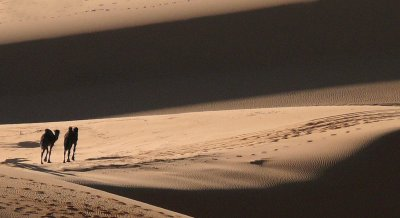 A mind of their own, Erg Chebbi, Sahara Desert, Morocco, 2006