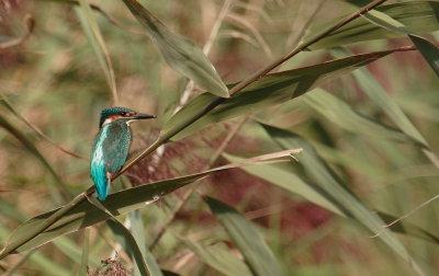oiseaux de France  et d'ailleurs (1)