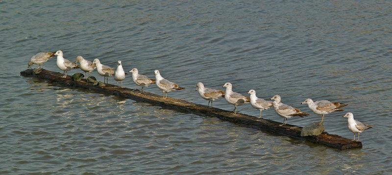 My Flock Of Seagulls