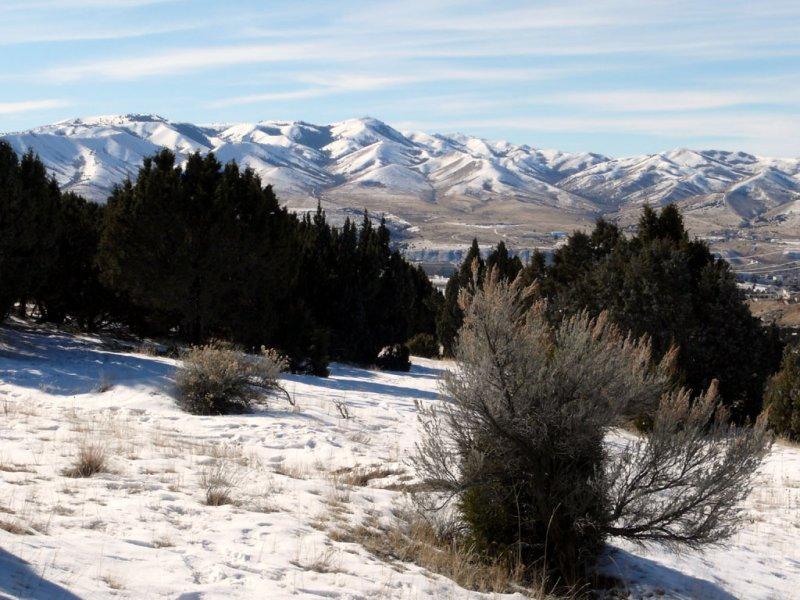 Winter Scene from Next To Buckskin Road smallfile P1000736.jpg