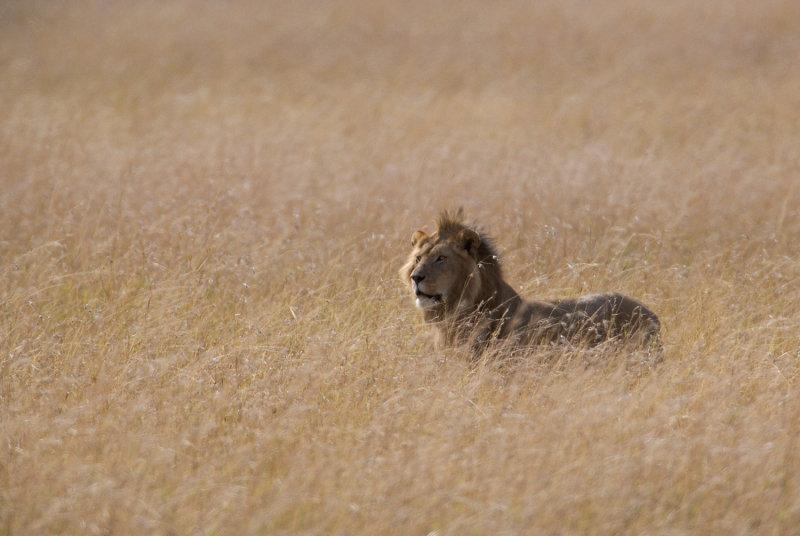 In His Natural Habitat