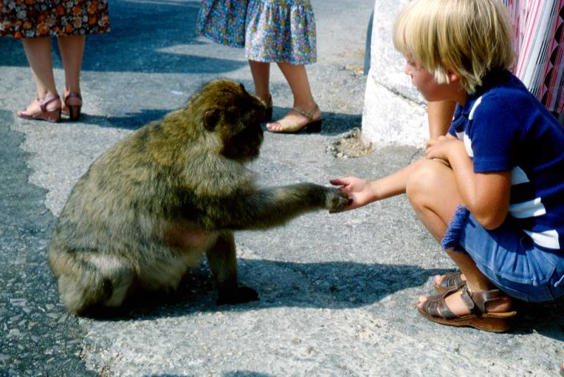 A_121_img_0433.jpg Boy feeding a Barbary Ape or Rock Apes, they are actually Barbary Macaques - © A Santillo 1979