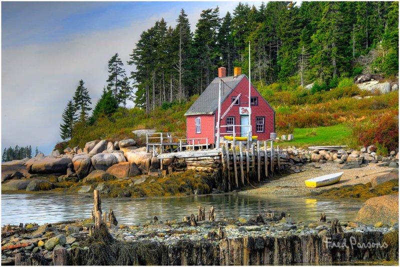 _DSC3151 Maine Cove