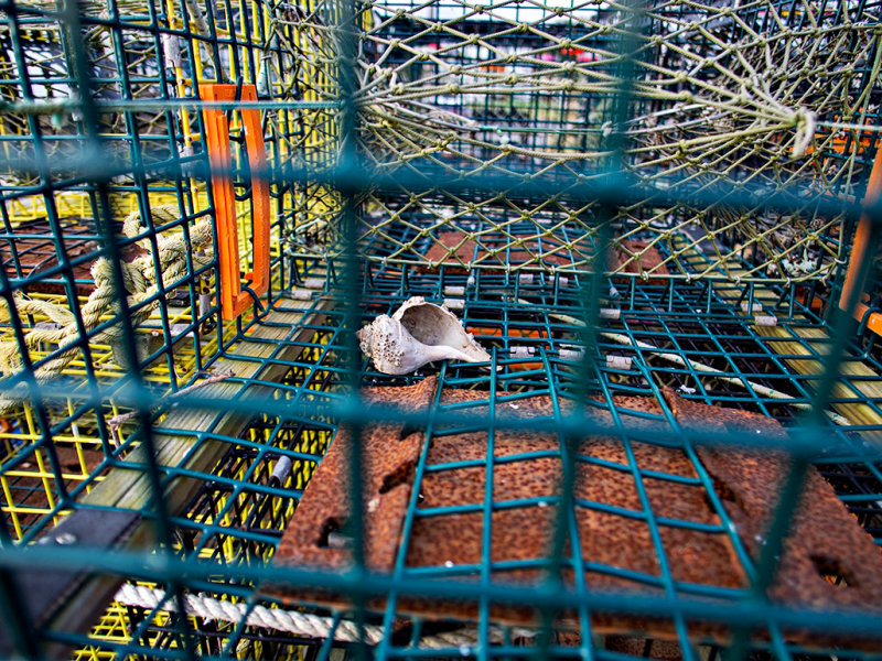 Shell in captivity - B&W version below.